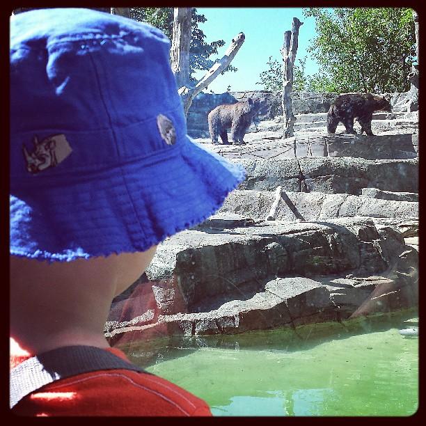 Bears @ the Indy Zoo