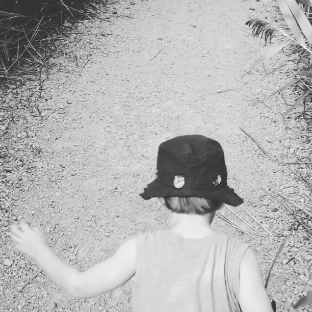 Max's Jungle Adventure