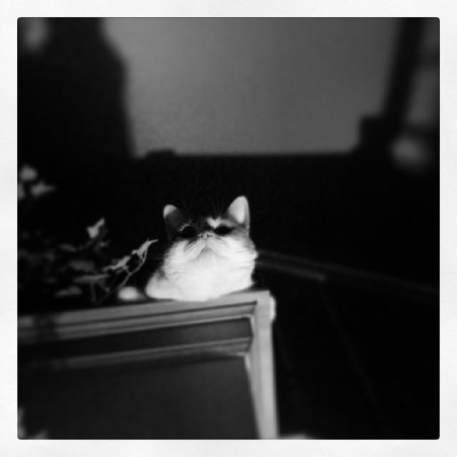 Stalking Kitty