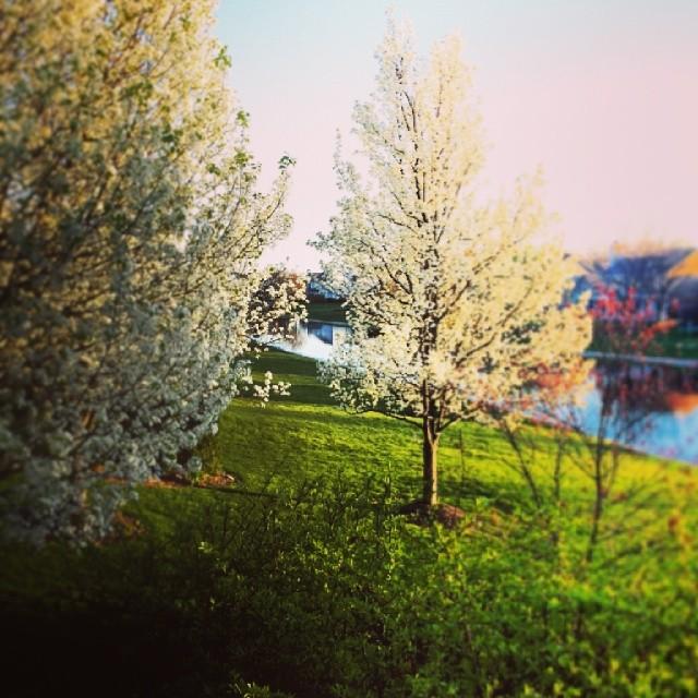 Spring's sprung.