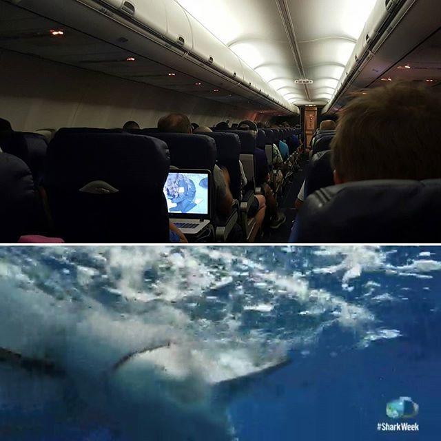 Watching Shark Week @ 40,000 ft is something special. #sharkweek
