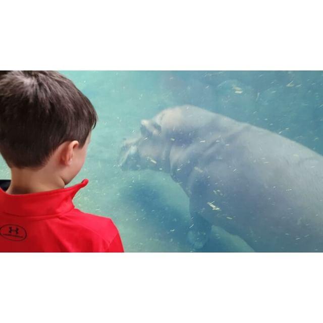 Hello Hippos!
