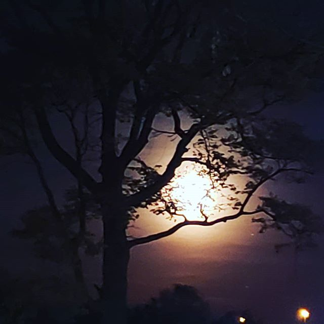 Crazy full moon to the east through the trees right now...