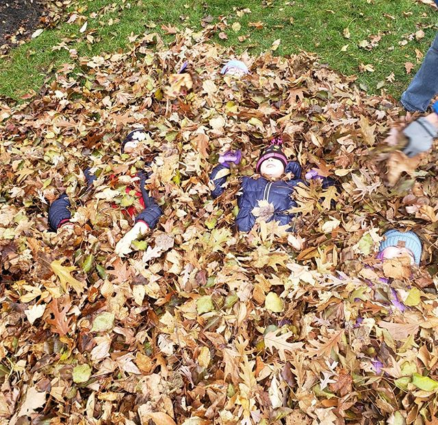 Can you find the four cousins hiding in the leaves?