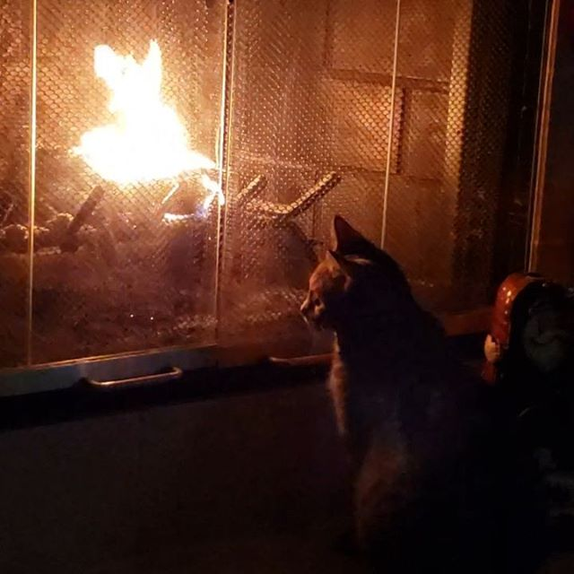 Kitty by the fire.